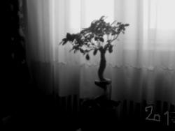 photo zb